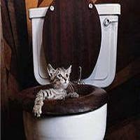 Как избавиться от кошачьего запаха
